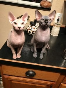 Shammi-Sphynx-Cats - two statues